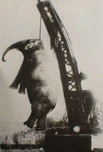 hanging elephant